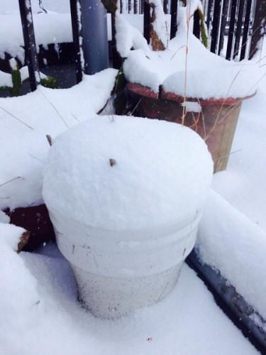 大人だって雪でテンションあがるよ。