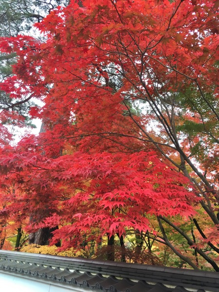 秋の京都!
